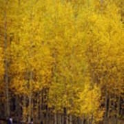Aspen Fall 2 Art Print by Marty Koch
