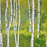 Aspen Forest Art Print by Heather Matthews