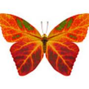 Aspen Leaf Butterfly 2 Art Print