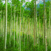 Aspen Pano Art Print by Stuart Deacon