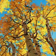 Aspen Sky High 2 Art Print