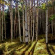 Aspen Sunbeams Art Print