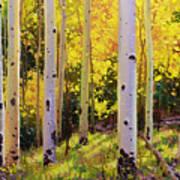 Aspen Symphony Print by Gary Kim