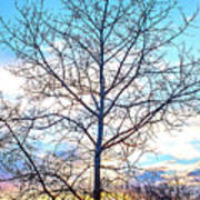 Aspen Tree At Sunset Art Print