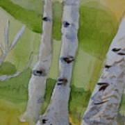 Aspen Trunks Art Print