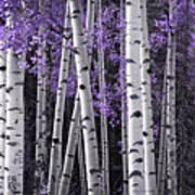 Aspen Trunks Lavender Leaves Art Print