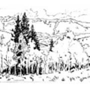 Aspens Against the Evergreens Art Print
