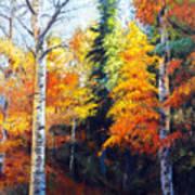 Aspens In Fall. Art Print