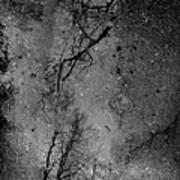 Asphalt-water-tree Abstract Refection 03 Art Print