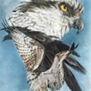 Assail Art Print