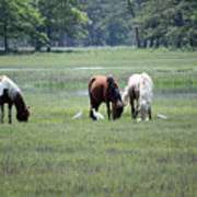 Assateague Island - Wild Ponies And Their Buddies  Art Print
