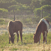 Assateague Island Wild Ponies Art Print