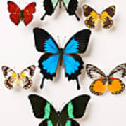 Assorted Butterflies Art Print