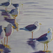 Assorted Gulls Art Print