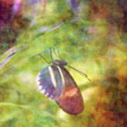 At Rest 8196 Idp_2 Art Print