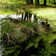 At The Edge Of The Forest Pond. Art Print