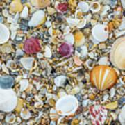 Atlantic' Shells Color Art Print