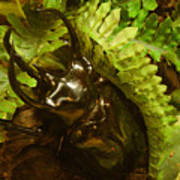 Atlas Beetle Art Print