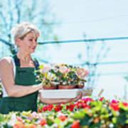 Attractive Gardener Selecting Flowers In A Gardening Center. Art Print