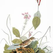 Audubon: Bunting Art Print