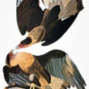 Audubon: Caracara, 1827-38 Art Print