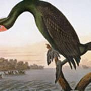 Audubon: Cormorant Art Print