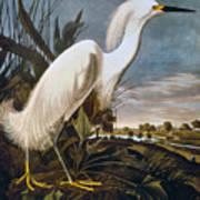 Audubon: Egret Art Print