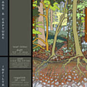Audubon Forest Hydrology Poster Art Print