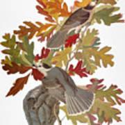 Audubon: Jay Art Print