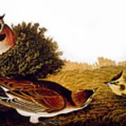 Audubon Lark Art Print