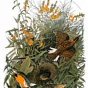 Audubon: Meadowlark Art Print