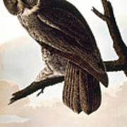 Audubon Owl Art Print