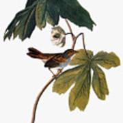 Audubon: Sparrow, 1827-38 Art Print