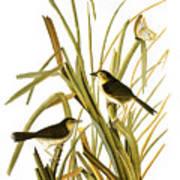 Audubon: Sparrow, (1827) Art Print
