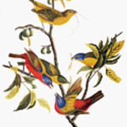 Audubon: Sparrows Art Print