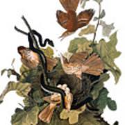 Audubon: Thrasher Art Print
