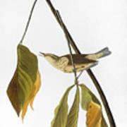Audubon: Thrush, 1827 Art Print