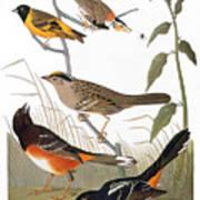 Audubon: Various Birds Art Print