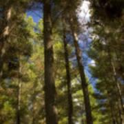 Aupouri Forest Art Print