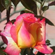 Aurora Color Rose Bud. Wow Art Print
