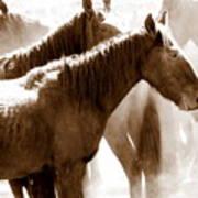 Wild Horses - Australian Brumbies 3 Art Print
