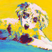 Aussie Puppy-yellow Art Print