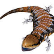 Australia Blue-tongued Skink Art Print