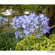 Australia Plant Life Art Print