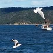 Australia - Seagulls And Trawlers Art Print