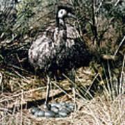 Australian Emu Art Print