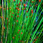 Australian Native Grass Art Print