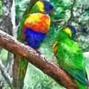 Australian Parakeets Art Print
