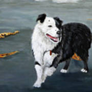 Australian Shepard Border Collie Art Print