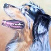 Australian Shepherd Dog Art Print